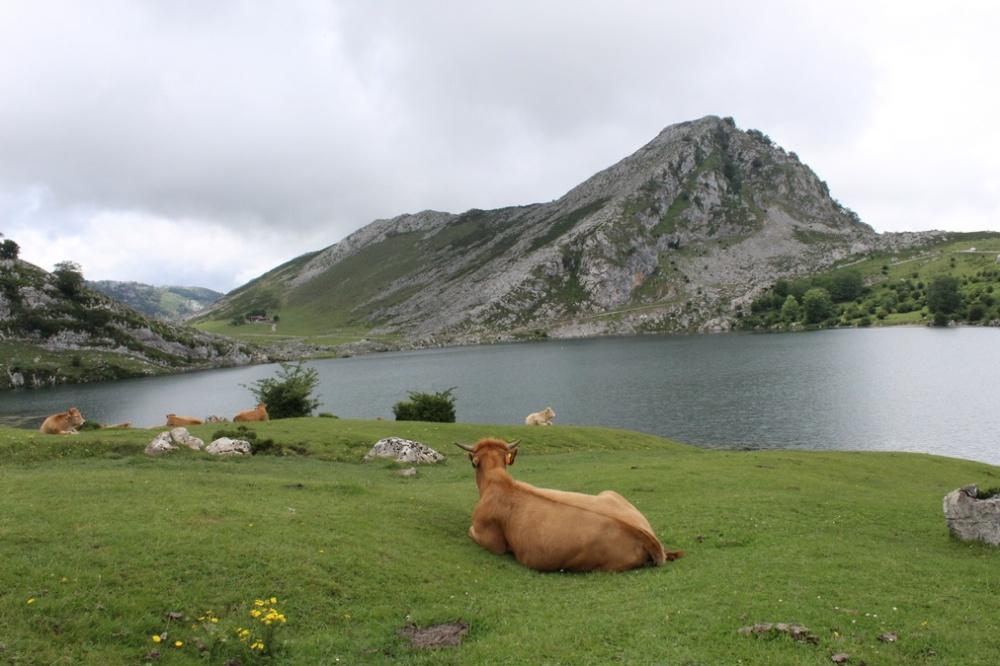 lagos-covadonga_asturias_espana_IMG_1999