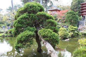 jardin-de-te_san-francisco_usa_IMG_2880