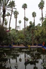 jardines_majorelle_marrakech_IMG_0860