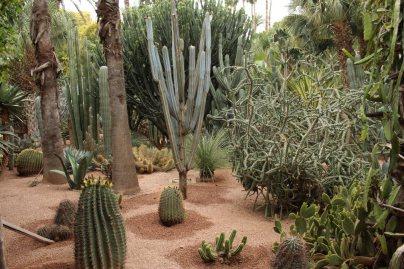 jardines_majorelle_marrakech_IMG_0900