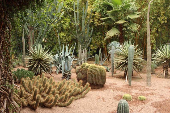 La colección de cactus de los Jardines Majorelle