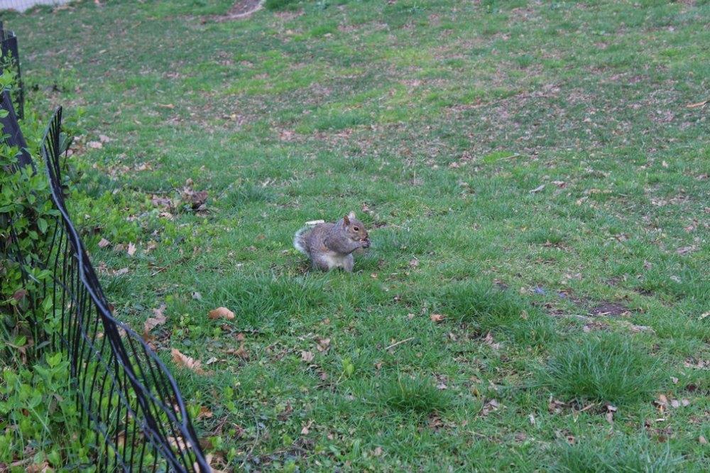 centralpark_nuevayork_usa_Central Park (6)