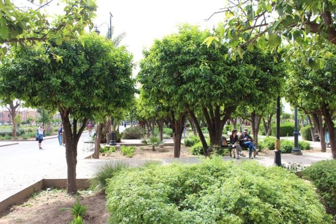 parque-koutobia_marrakech_marruecos_img_9523